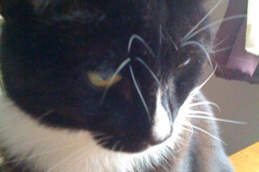 photo of Bilbo the cat
