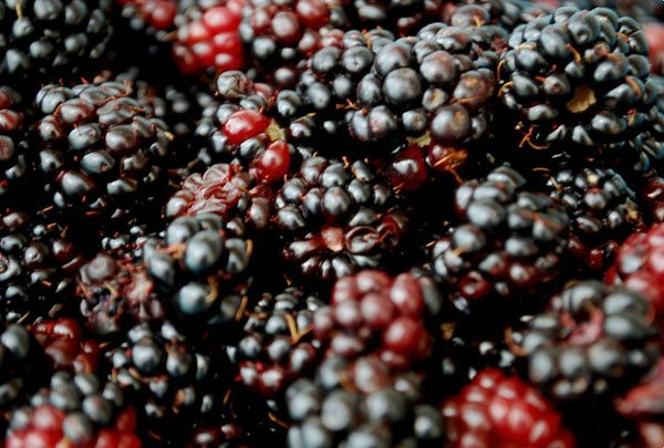 Lots of Blackberries