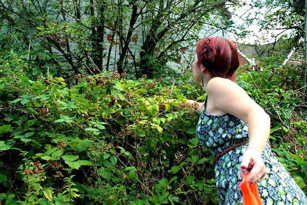 Picking the Blackberries