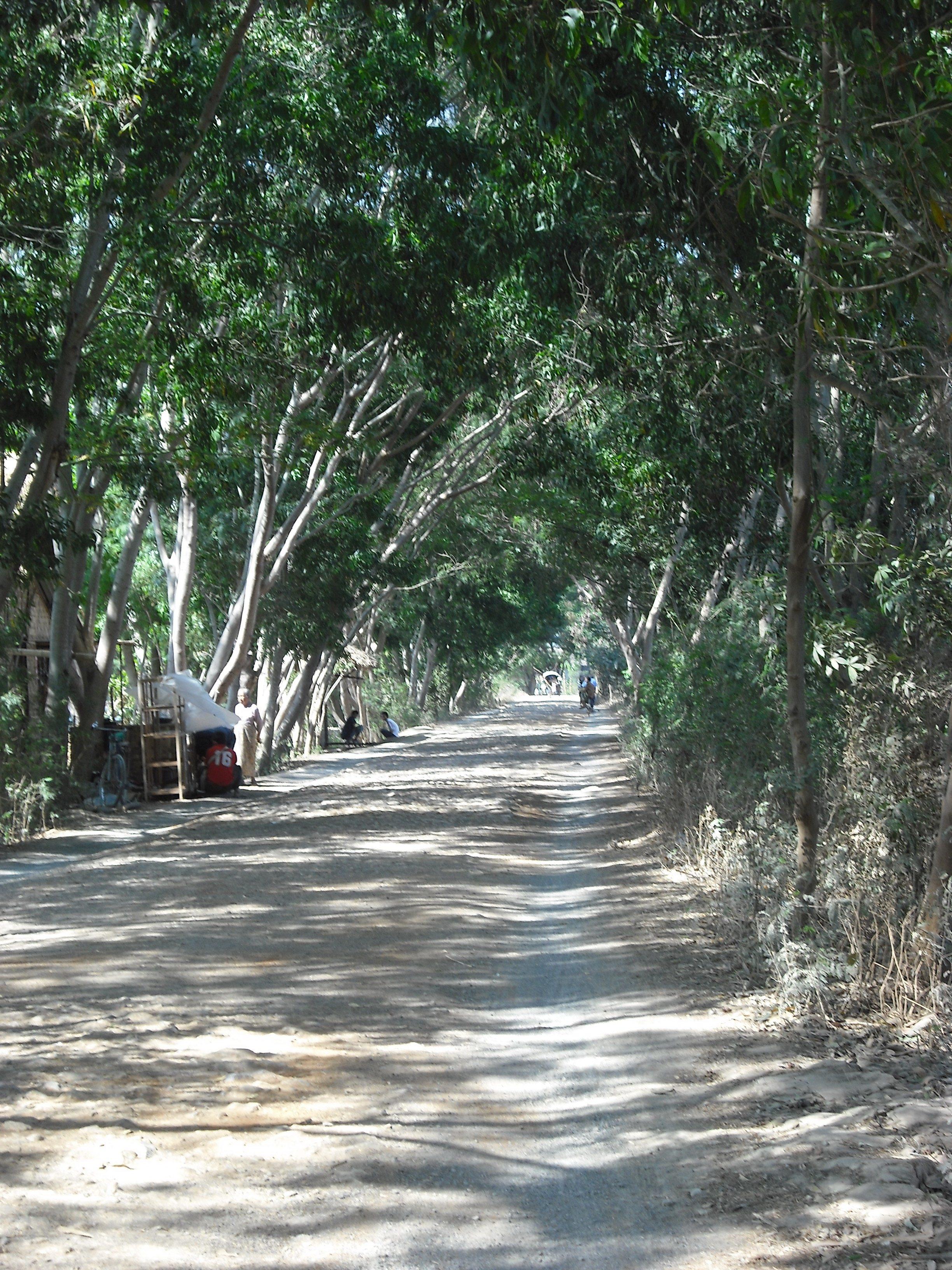 tree canopy road