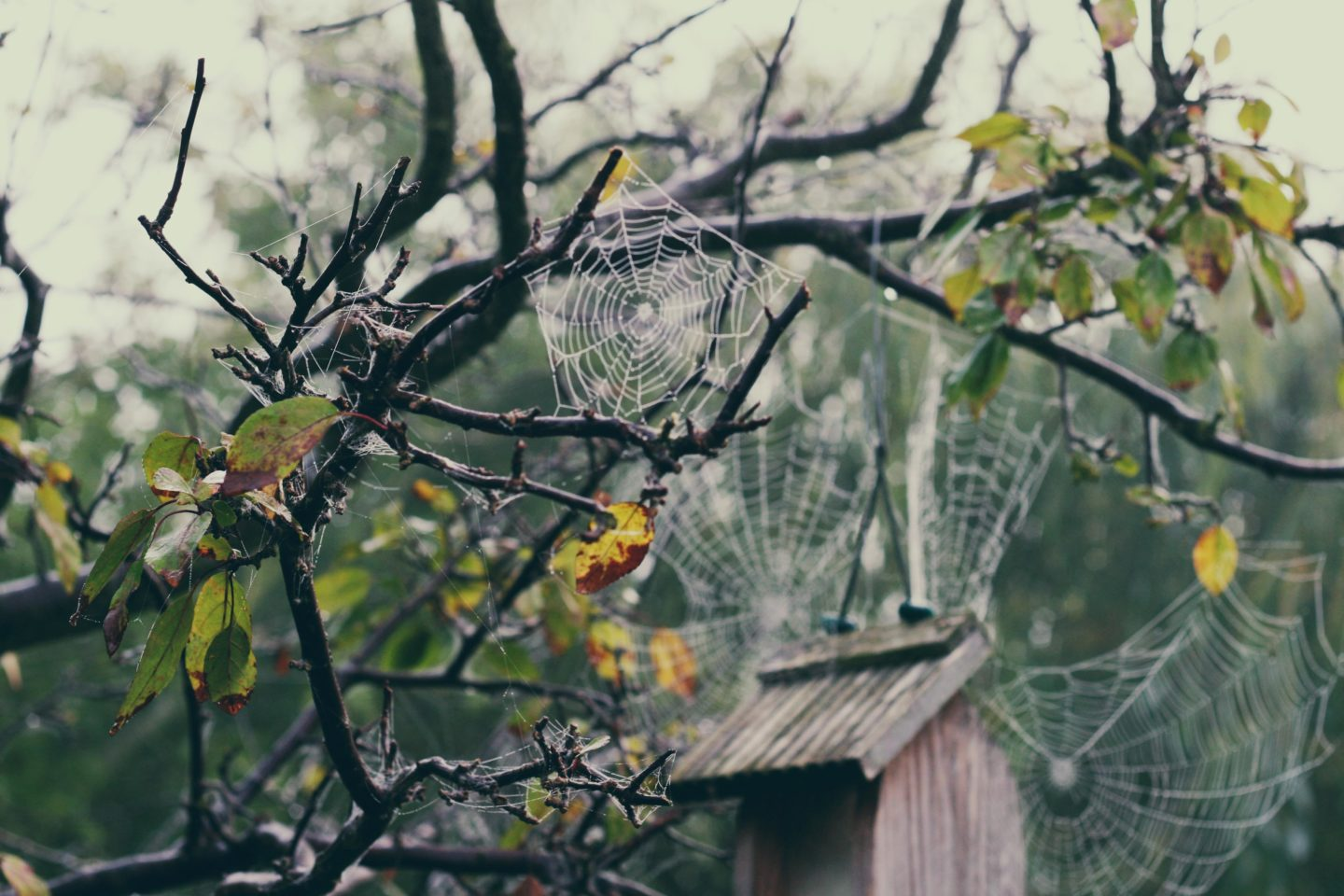 Little web