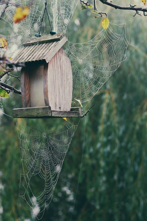 Spiderweb on Bird House