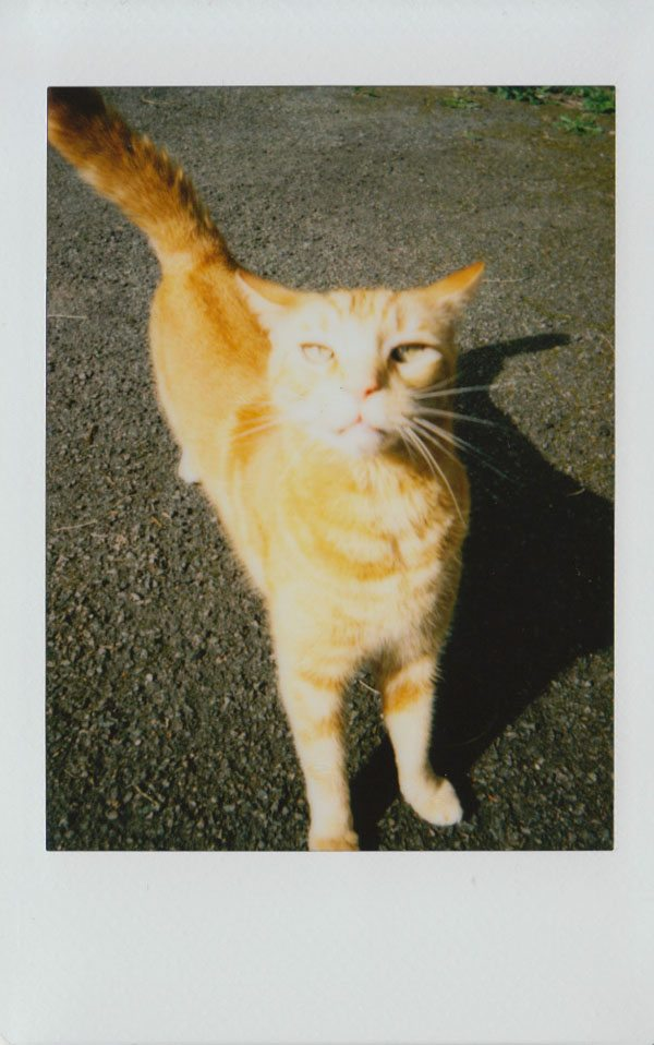 Cat on Instax