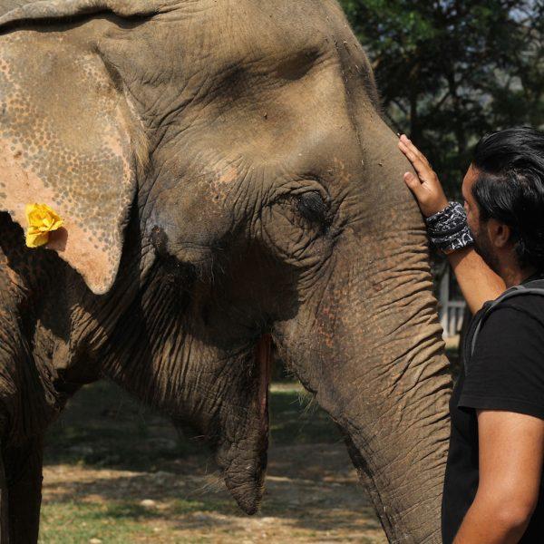 Raj and Elephant strokies