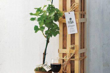 original_mini-vineyard