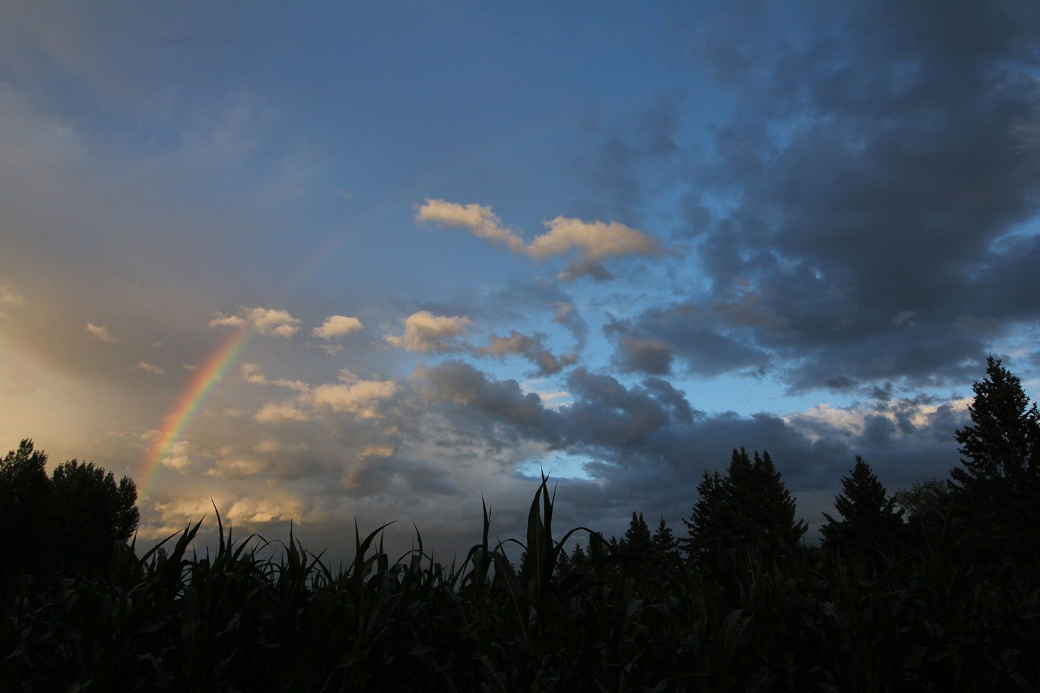rainbow-on-farm