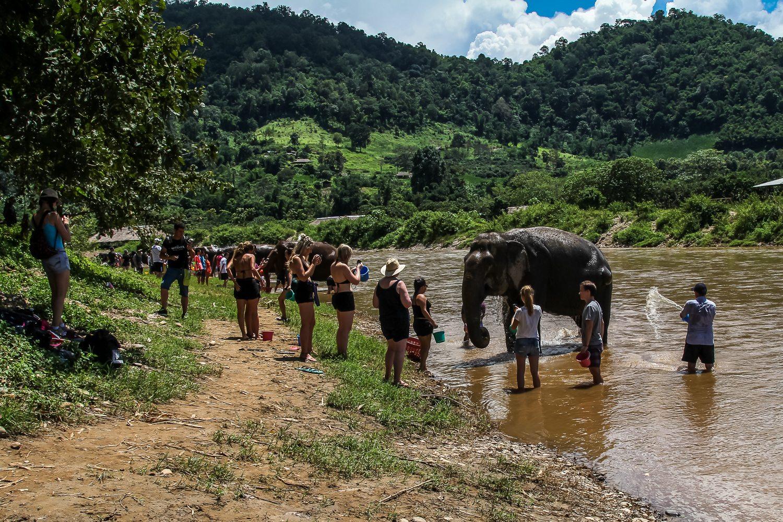 Bathe Elephants