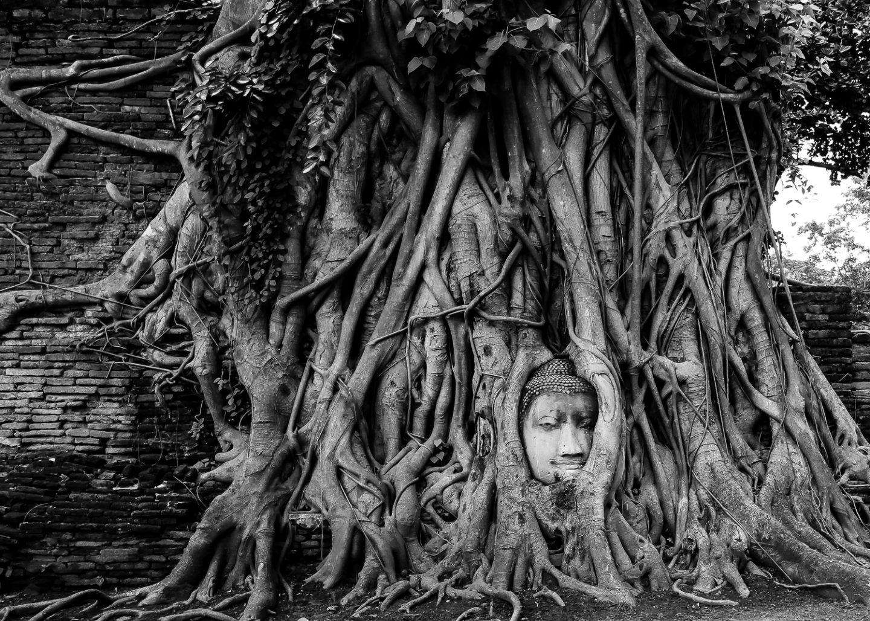 Buddha Head Maha That Ayutthaya Thailand
