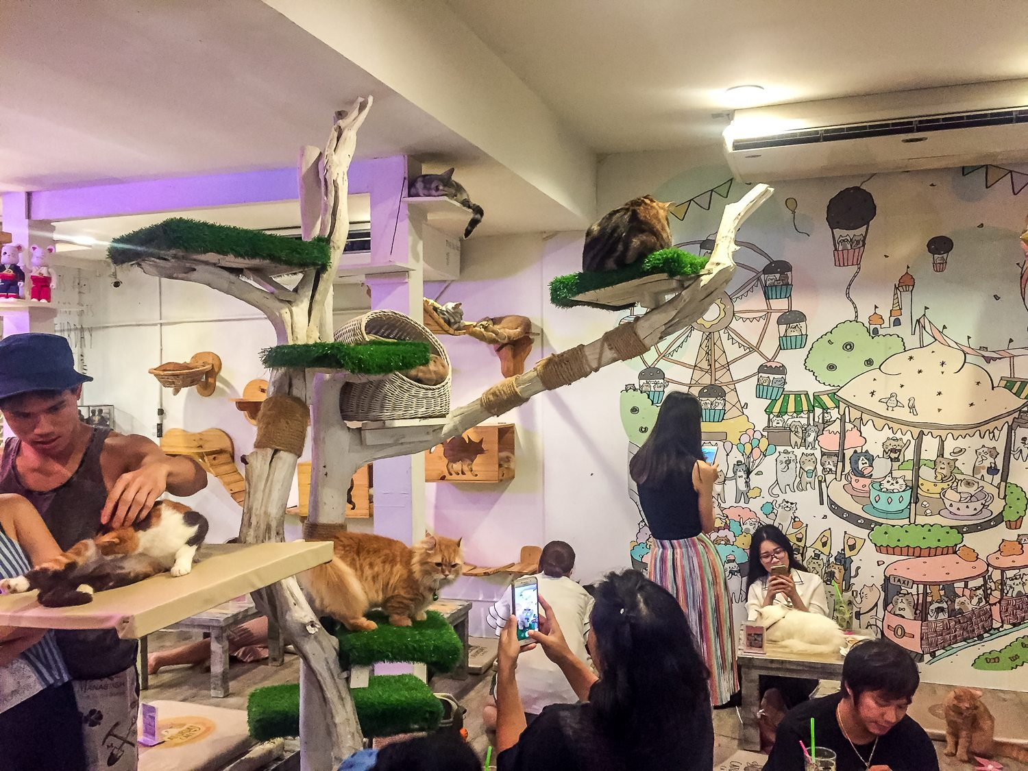 Cat Cafe Bangkok Thailand