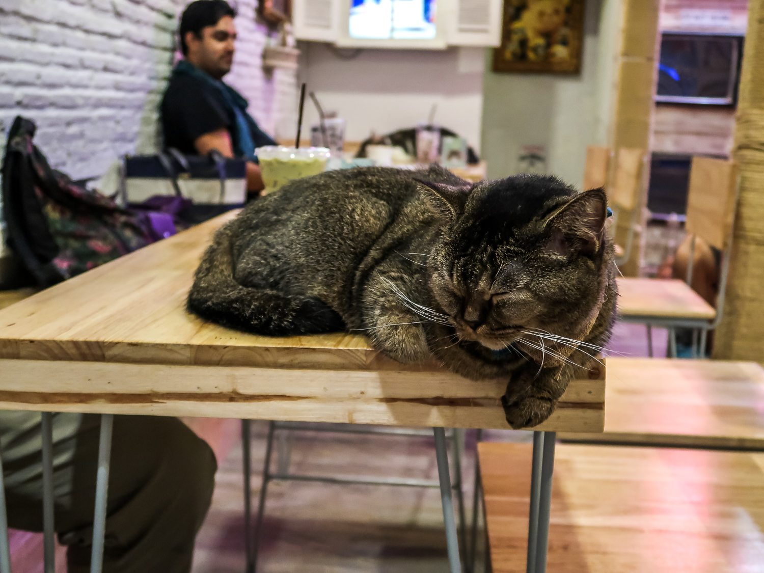 Cat sleeping at cat cafe