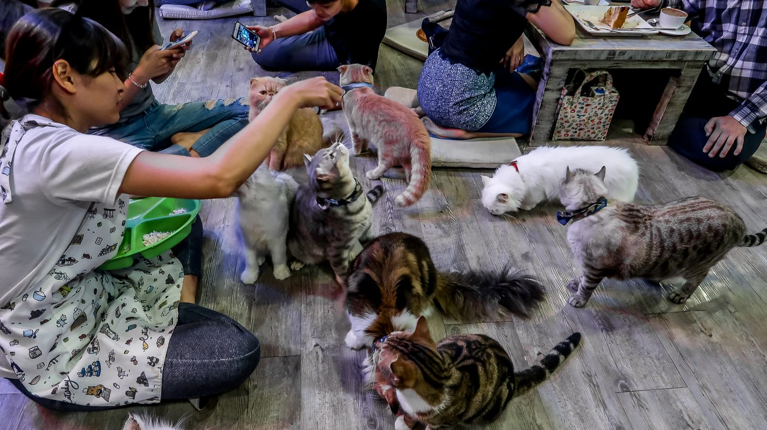 Cats being fed at Cat Cafe