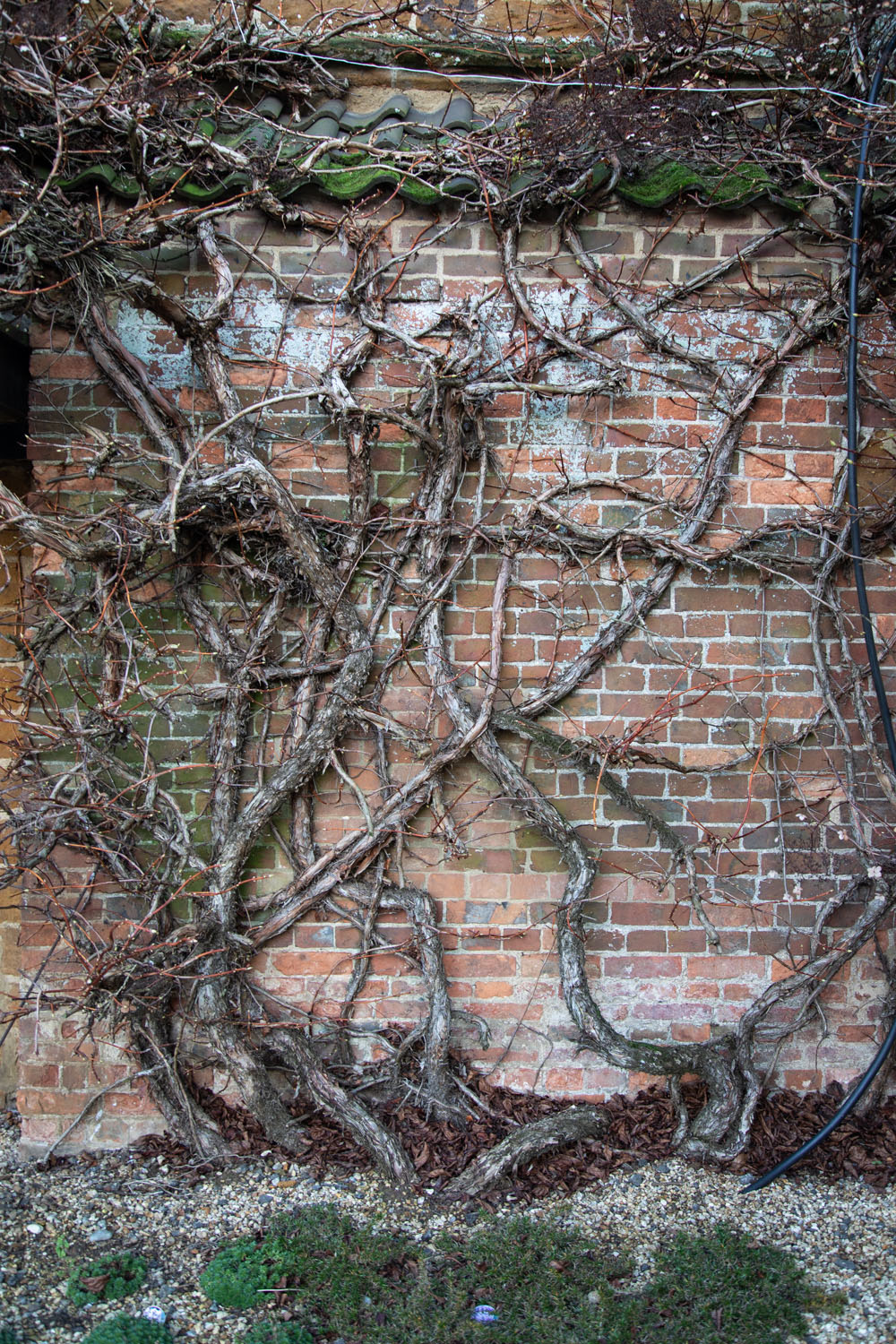 plant branches climbing a wall