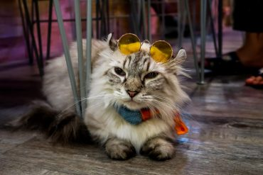 Cool cat Bangkok