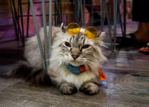 Cool cat Bangkok