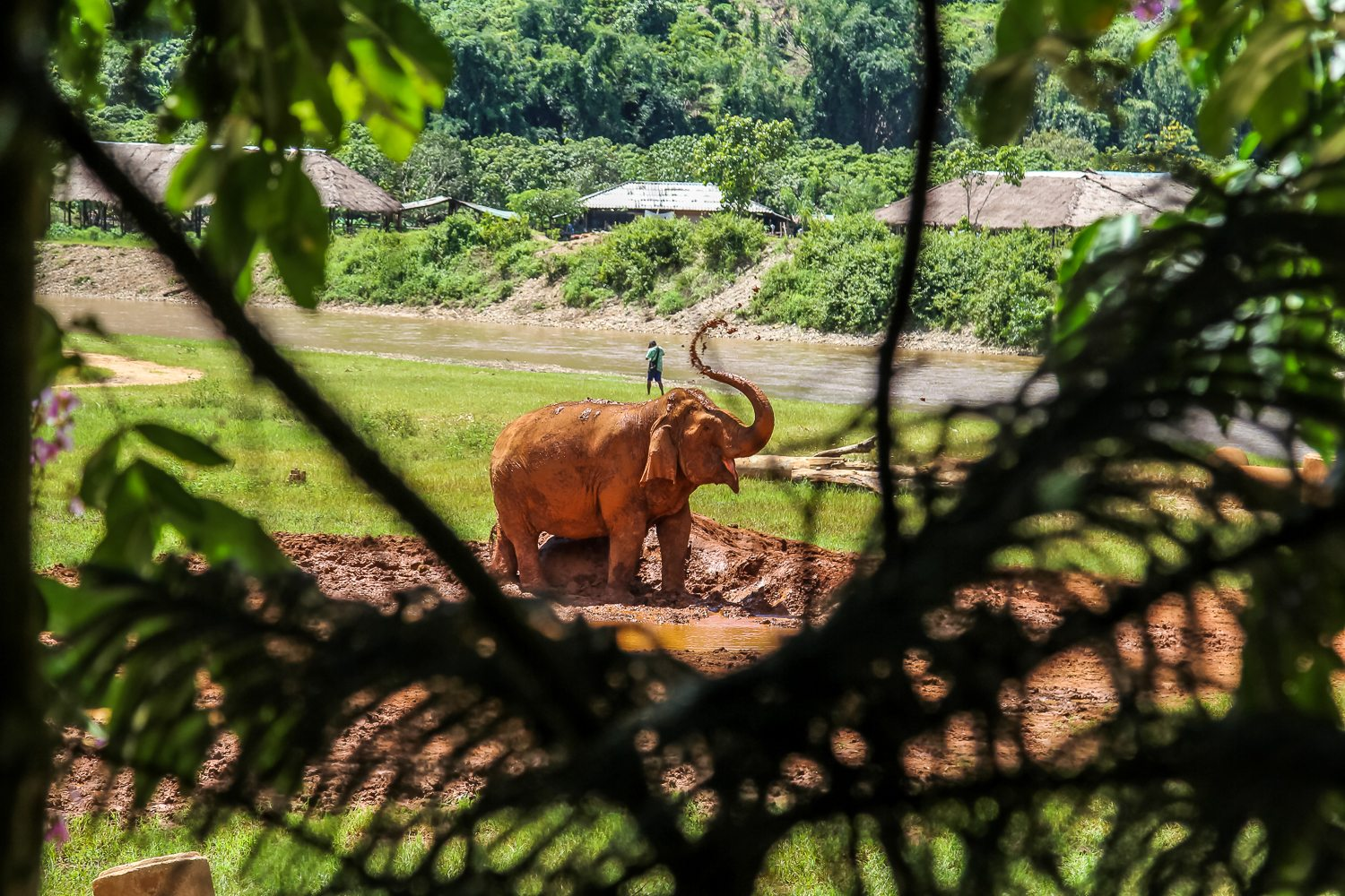 Elephant Nature Park Sanctuary