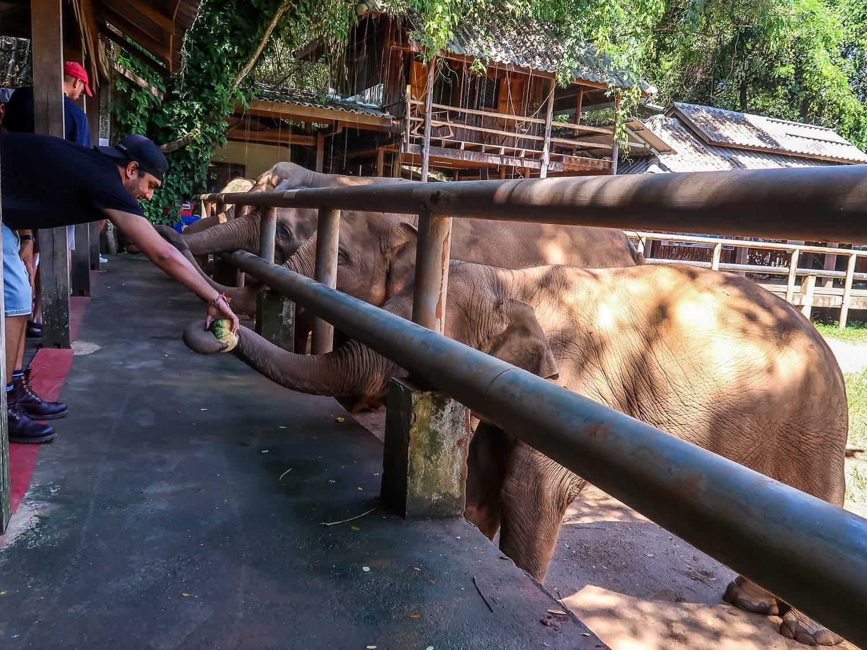 Feeding at Elephant Nature Park