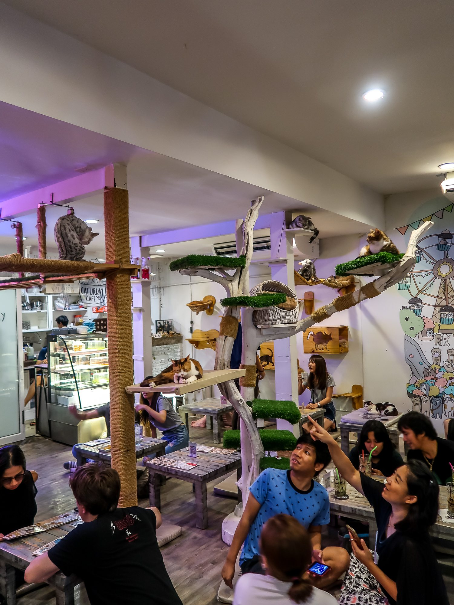 Inside Caturday cat cafe