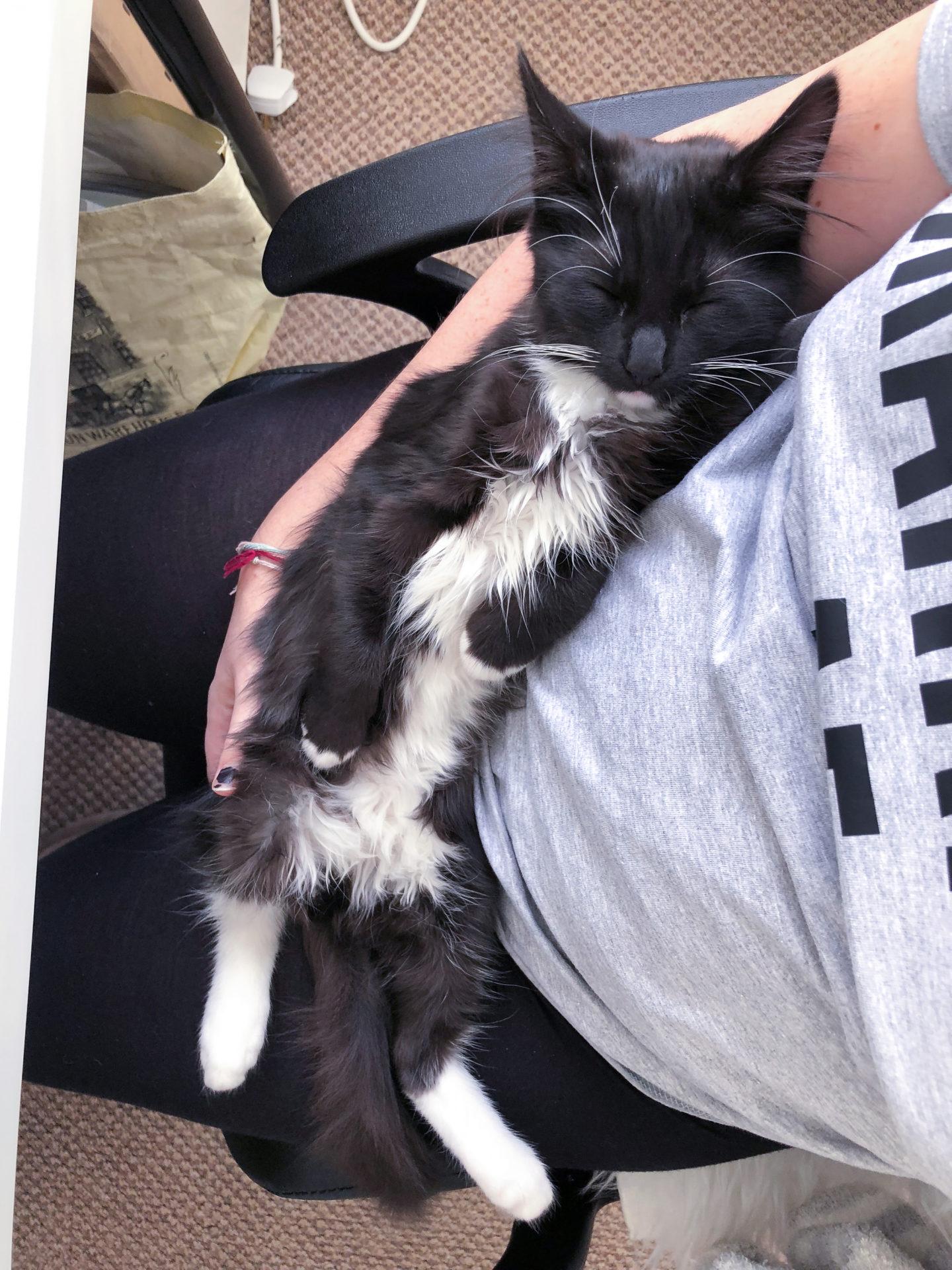 Bear the kitten