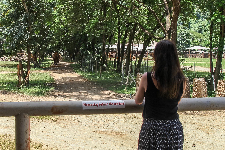 Rosalilium Elephant Nature Park