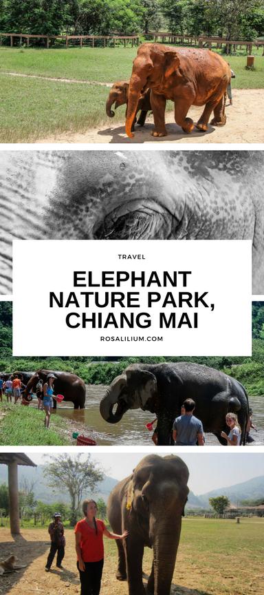 Visiting Elephant Nature Park Sanctuary Thailand
