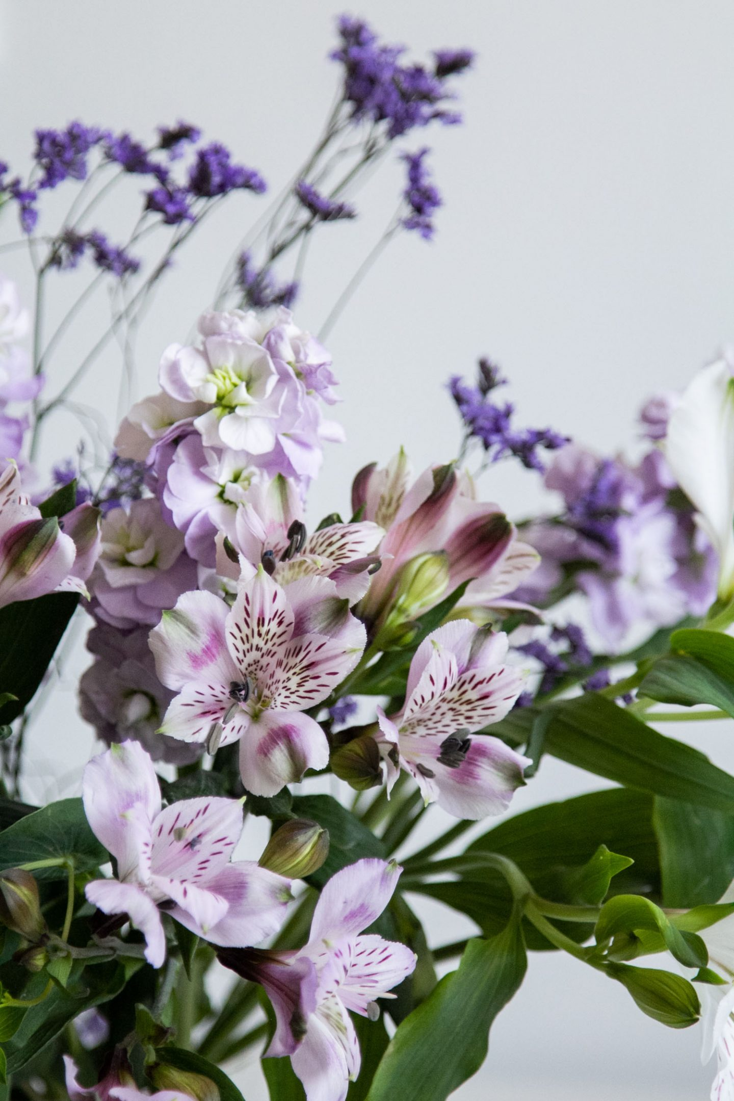 close up of purple and white flowers