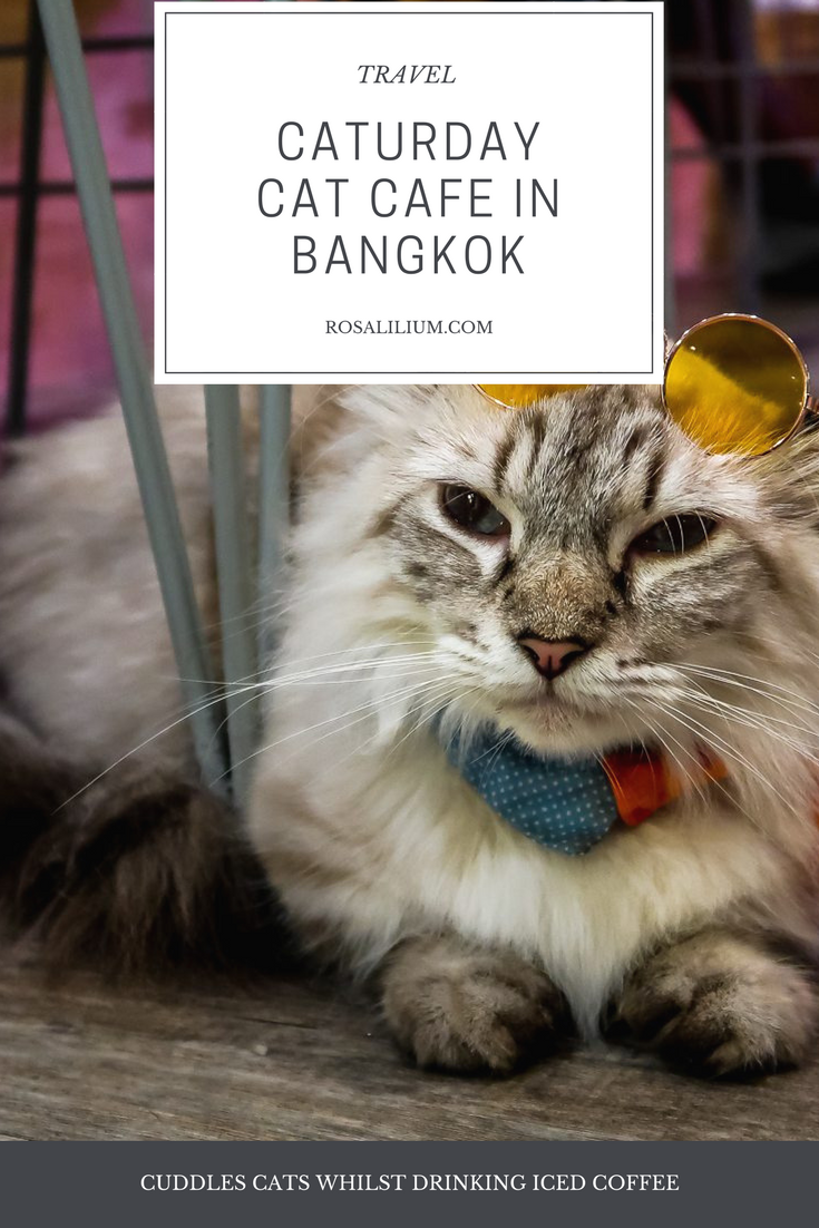 cat cafe bangkok