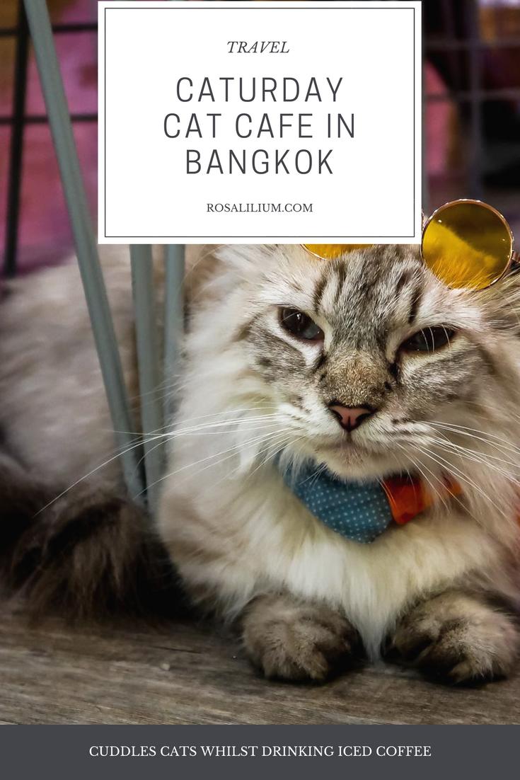 cat cafe bangkok