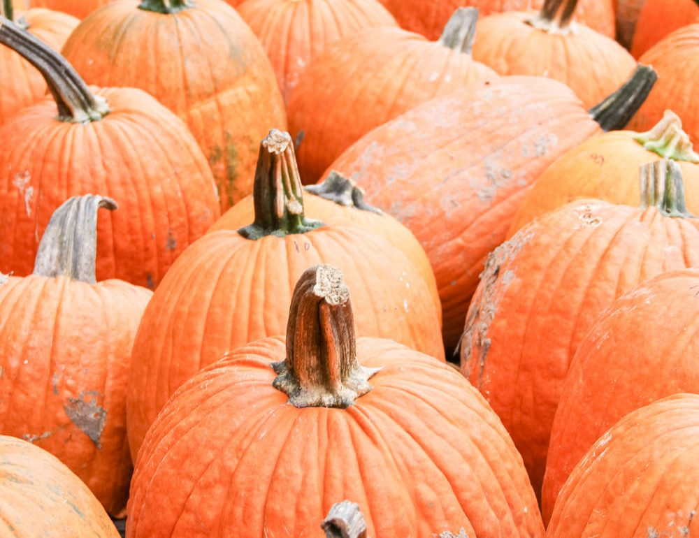 what to do in autumn fall pumpkins