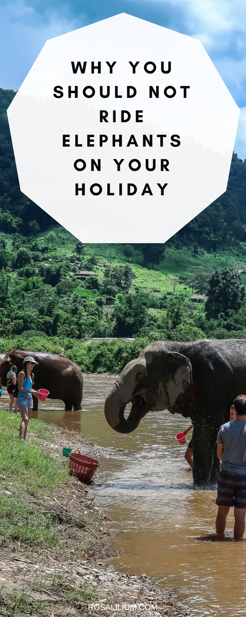 why you should not ride elephants on your holiday